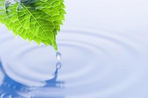 Gestión en Ambiental